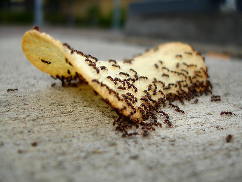 Knock \'em Dead: Tried and True Way to Get Rid of Ants ...